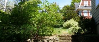 pruning resized